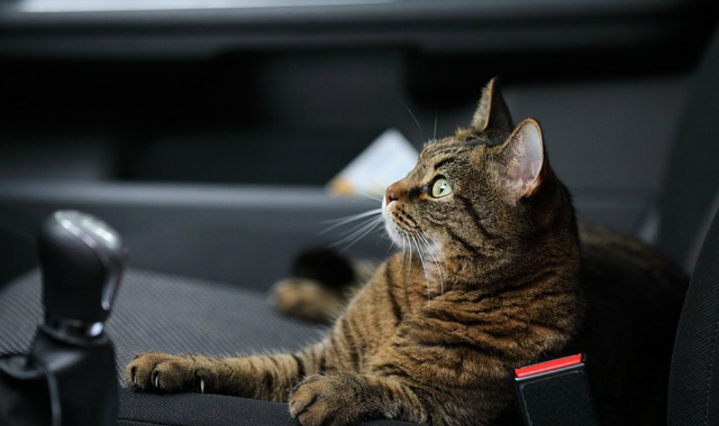 Travel Checklist For Your Cat